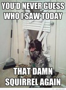 Ohhh Dog Meme Guy