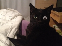 One eyed cat receives transplant from anonymous donor