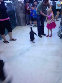 One of the penguins escaped while I was at the zoo