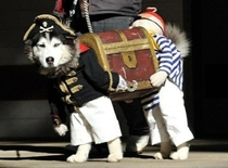 One of the strangest things and most awesome dog costumes made