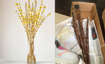 Ordered Flowering Forsythia Branches for Mothers Day Got Box of Dead Sticks