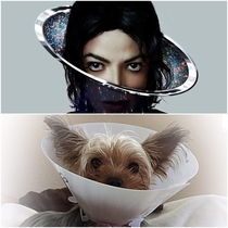 Our dog got spayed and something about her wearing her cone seemed familiar