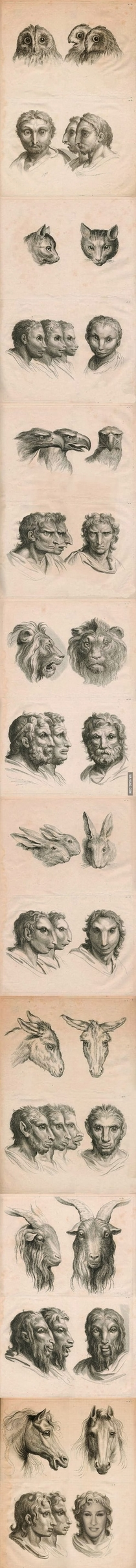 Pencil drawings of what humans would look like if they had evolved from different animal heritages other than apes Interesting work on possible races facial distinctions etc