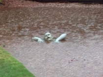 Perfectly placed lawn ornament in Arizona floods