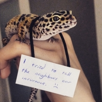 Pet shaming a gecko