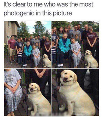 photogenic dog
