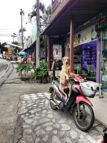Pic #1 - A friend came across this dog just hanging out while on vacation