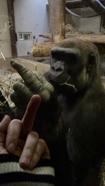 Pic #1 - A gorilla flipped me off so I flipped him off in return and he was very offended