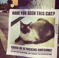 Pic #1 - Awesome Cat