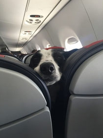 Pic #1 - Doggo on plane ride