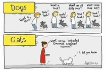 Pic #1 - Dogs Vs Cats