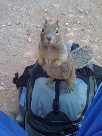 Pic #1 - Grand Canyon locals are taking park security into their own hands