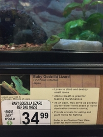 Pic #1 - I added some new pet options to a local pet store