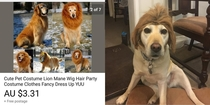 Pic #1 - Lion mane dog costume