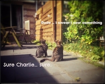 Pic #1 - Meet Charlie and Lana - The Album