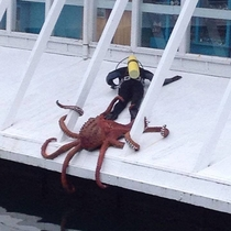 Pic #1 - Sir do you have a moment to talk about our lord and savior Cthulu