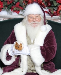 Pic #1 - So I brought my Guinea pig to get his picture taken with Santa then he ran up Santas jacket