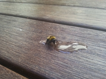 Pic #1 - The day I tried to rescue an exhausted bumble bee