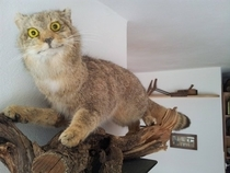 Pic #1 - This is Taxiderpy