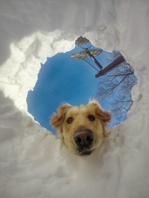 Pic #1 - When you get buried in snow but your dog is a retriever