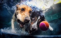Pic #10 - Dogs  ball  Underwater camera