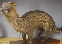 Pic #10 - This is Taxiderpy