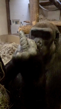 Pic #2 - A gorilla flipped me off so I flipped him off in return and he was very offended