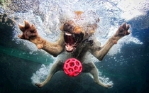 Pic #2 - Dogs  ball  Underwater camera