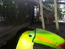 Pic #2 - I got a little too close to the Toucan when trying to take his picture