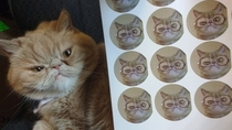 Pic #2 - I thought my oddly-looking cat would look good in sticker form Turns out I was right