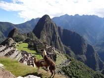 Pic #2 - I was top comment earlier on a post about a llama in Machu Piccu You guys sent me a bunch of funny llama pics as replies so I compiled them all into  album Enjoy