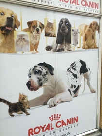 Pic #2 - My local pet store was vandalized