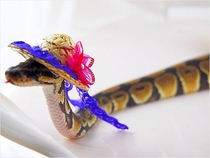 Pic #2 - Snakes wearing hats