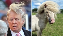 Pic #2 - Things Donald Trump looks like