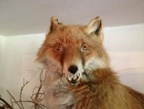 Pic #2 - This is Taxiderpy