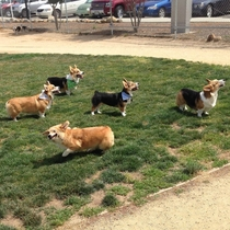 Pic #2 - You can guess which one my dog is X-post from rcorgi