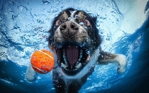 Pic #3 - Dogs  ball  Underwater camera
