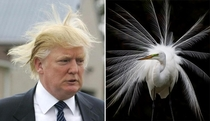 Pic #3 - Things Donald Trump looks like