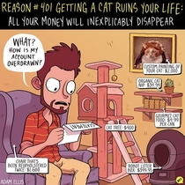 Pic #3 -  Ways Getting A Cat Ruins Your Life