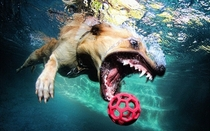 Pic #4 - Dogs  ball  Underwater camera