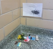Pic #4 - There has been a dead cockroach in the anthropology buildings stairwell for at least two weeks Some enterprising person has now made her a little shrine