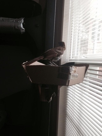 Pic #4 - There was a bird outside my door today I turned him into a Guard Bird He did his job well