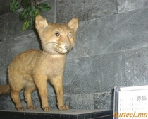 Pic #4 - This is Taxiderpy