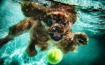 Pic #5 - Dogs  ball  Underwater camera