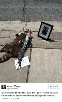 Pic #5 - The Toronto Raccoon Story
