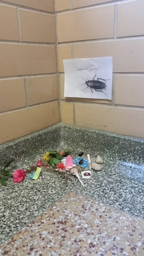 Pic #5 - There has been a dead cockroach in the anthropology buildings stairwell for at least two weeks Some enterprising person has now made her a little shrine