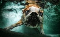Pic #6 - Dogs  ball  Underwater camera