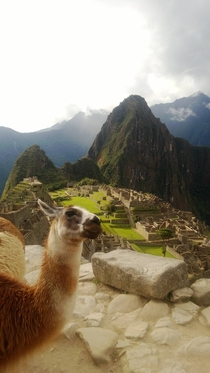 Pic #6 - I was top comment earlier on a post about a llama in Machu Piccu You guys sent me a bunch of funny llama pics as replies so I compiled them all into  album Enjoy