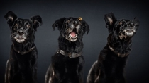 Pic #6 - Photographers hilarious portraits capture dogs trying to catch treats