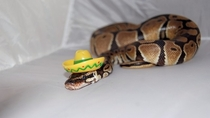 Pic #6 - Snakes wearing hats
